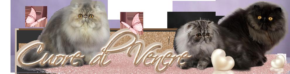Cuore di Venere Cattery